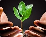 Hands holding a sprouting sapling