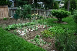 healthy backyard vegetable garden