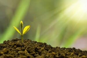 Sapling sprouting from the earth representing investment growth